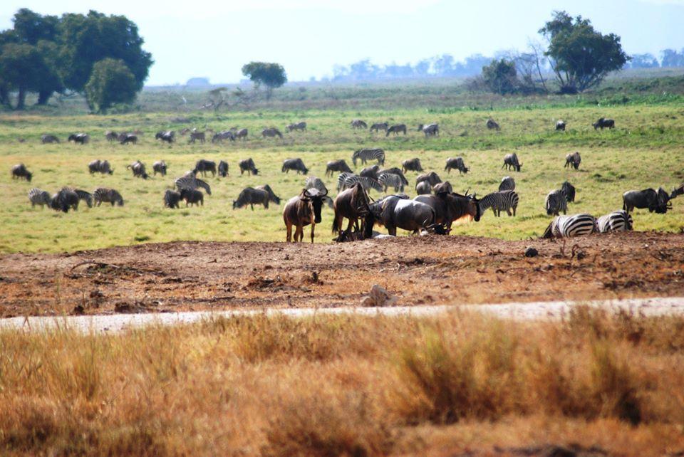 animail safari kenya