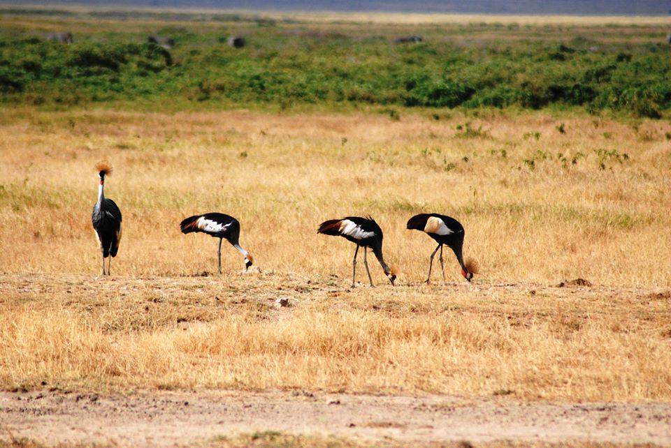 animali safari kenya
