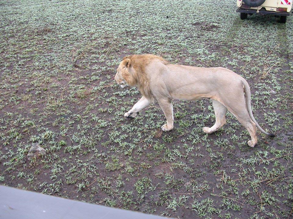 leone kenya