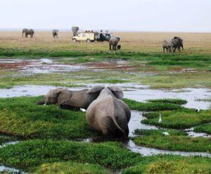 safari jeep kenya
