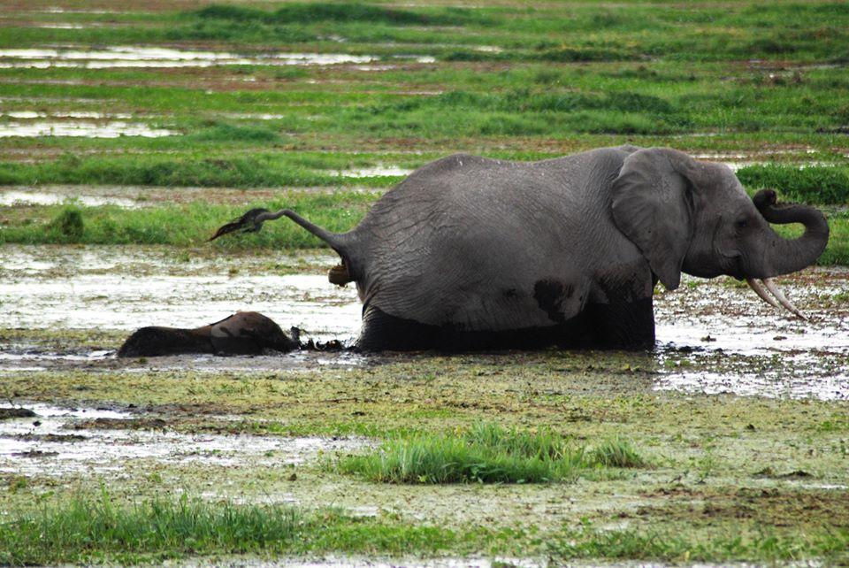 safari kenya elefanti