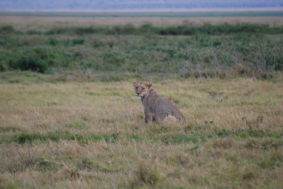 safari kenya leone